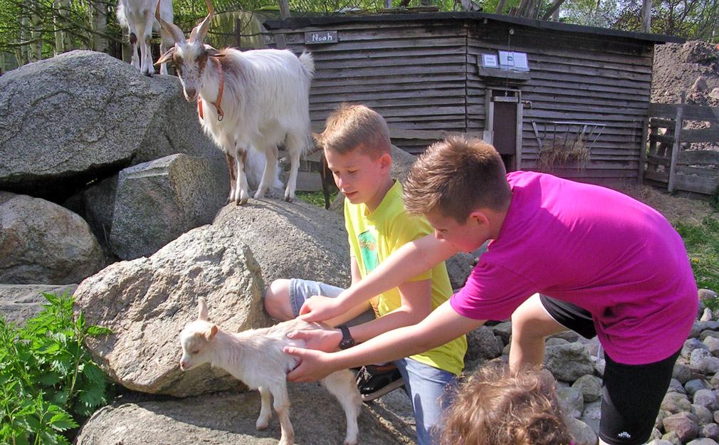 Bauernhof Urlaub Rügen